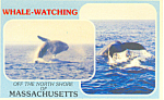 Whale Watching, North Shore, Massachusetts   Postcard