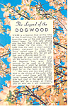 Click here to enlarge image and see more about item p16746: Legend Of The Dogwood Postcard