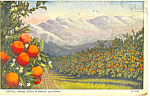 Click here to enlarge image and see more about item p16757: Foothill Orange Groves California Postcard p16757 1926