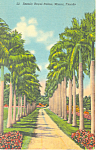 Stately Royal Palms Miami Florida Postcard p16924