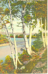 Rippling Water and BIrches ,NH Postcard 1945