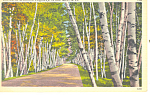 Shelburne Memorial Highway ,NH Postcard 1959