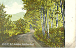 Gale River Road, Bethlehem,NH   Postcard