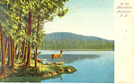 In The Adirondacks NY  Postcard p17464