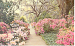 Click here to enlarge image and see more about item p17560: Garden Orton Plantation ,NC Postcard