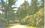 Approach Road Biltmore House NC Postcard p17590