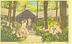 Click here to enlarge image and see more about item p17628: Nantahala National Forest NC Postcard p17628