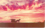 Amish Buggy, PA Dutch Country Postcard