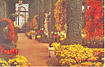 Click here to enlarge image and see more about item p17721: Longwood Gardens, Kennett Square,PA Postcard