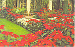 Click here to enlarge image and see more about item p17724: Longwood Gardens, Kennett Square,PA Postcard