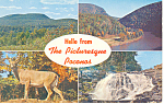 Picturesque Poconos,PA Postcard