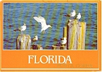 Click here to enlarge image and see more about item p1785: Florida Seagulls Postcard p1785