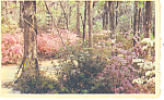 Click here to enlarge image and see more about item p17864: Cypress Gardens, Oakley, SC Postcard 1951