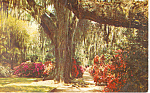 Click here to enlarge image and see more about item p17884: Magnolia Gardens,SC  Postcard