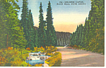 Spearfish Canyon Black Hills  SD  Postcard p17918