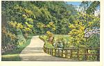 Winding Drive Warner Park,Nashville,TN Postcard