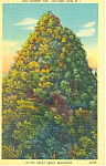 Chimney Tops ,TN Postcard