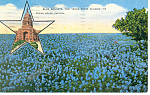 Bluebonnets-State Flower of TX Postcard 1944