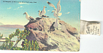 Bird Island Great Salt Lake UT Postcard p18168