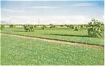 Click here to enlarge image and see more about item p1822: Tucson AZ Turfgrass Farm Adv. Postcard