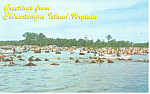 Wild Pony Swim Chincoteague, VA Postcard