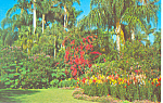 Click here to enlarge image and see more about item p18542: Sunken Gardens Florida Postcard p18542