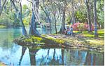Silver River,Silver Springs, Florida Postcard