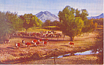 Click here to enlarge image and see more about item p18608: Cattle Ranch Postcard p18608