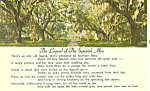 Click here to enlarge image and see more about item p18624: The Legend Of The Spanish Moss Postcard