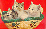 Click here to enlarge image and see more about item p18753: Three adorable kittens in a basket Postcard