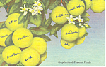 Click here to enlarge image and see more about item p18854: Grapefruit and Blossoms Postcard p18854