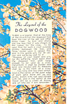 Click here to enlarge image and see more about item p19077: Legend Of The Dogwood Postcard p19077