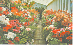 Click here to enlarge image and see more about item p19113: Butchart Gardens Victoria BC Canada Postcard p19113