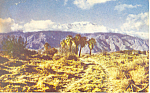 Seven Palms, California Postcard