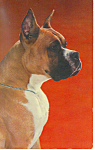 Dog Boxer Postcard