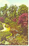 Princess Flower,Cypress Gardens, FL Postcard