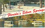 Near Ocala,Silver Springs, FL Postcard