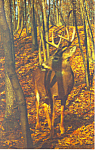 A Stately Buck Postcard p19377