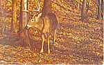 A Big Buck Postcard
