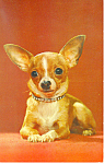 Cute Dog Postcard
