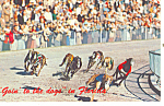 Click here to enlarge image and see more about item p19429: Greyhound Racing in Florida p19429
