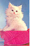 Click here to enlarge image and see more about item p19645: Cute Kitten The Queen