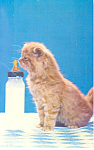 Click here to enlarge image and see more about item p19646: Cute Kitten With Baby Bottle Postcard p19646
