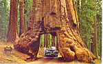 Tunnel Tree Yosemite National Park California p19756