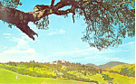 Click here to enlarge image and see more about item p19769: Hearst Castle California Postcard p19769