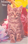Click here to enlarge image and see more about item p19902: Kitten Postcard