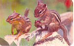 Click here to enlarge image and see more about item p19908: A Pair of Chipmunks Postcard p19908