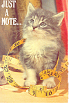 Click here to enlarge image and see more about item p19920: Kitten with Tape Measure Postcard p19920