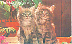 Click here to enlarge image and see more about item p19921: Pair of Kittens Postcard p19921