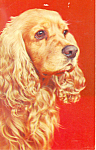 Cocker Spaniel Postcard p19923
